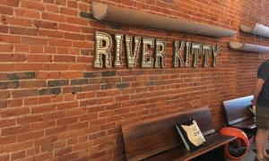 VHS Acquires Full Ownership of River Kitty Cat Cafe