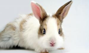 Dreaming of an Easter Bunny? Adopt, Don't Buy!
