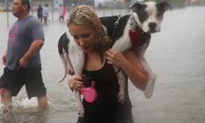 Hurricane Harvey: How You Can Help
