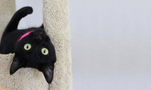 Are Black Cats Really Less Adoptable?