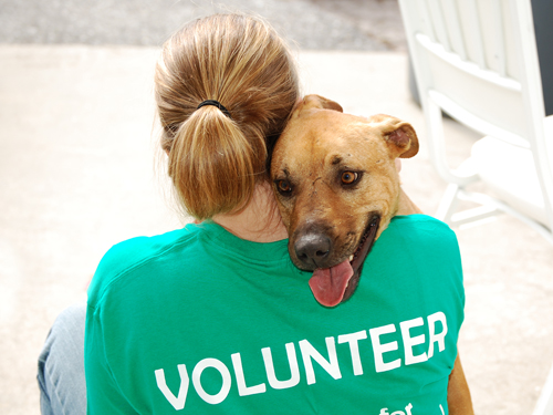 Image result for animal shelter volunteer